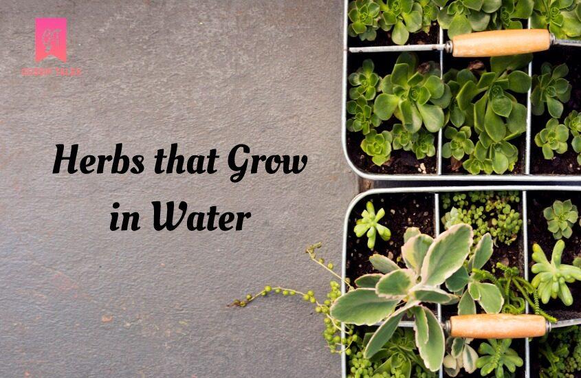 Herbs that Grow in Water: Make Your Own Indoor Herb Garden